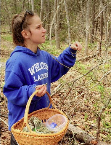Light-skinned woman with a blue sweatshirt and hair in a ponytail collecting moss and lichen specimens in a basket