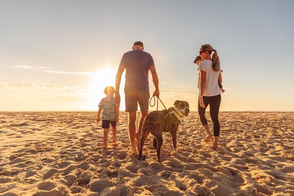 Register, renew or update your dog registration