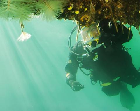 Marine Biosecurity Porthole
