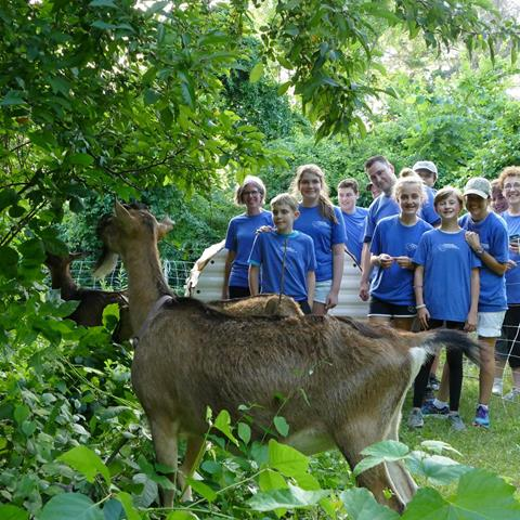 Several brown goats chewing on plants, with Stoneham Volunteers in blue T-shirts standing behind them