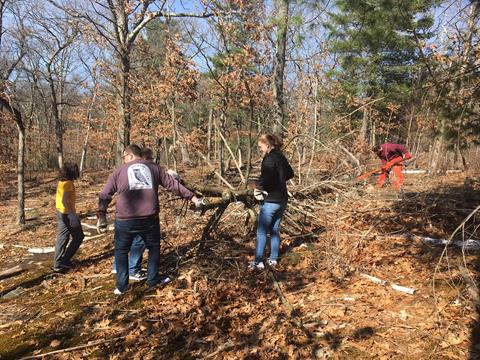 Volunteers carring a large downed tree with many branches and no leaves. Photo Credit:  Gillian Lay