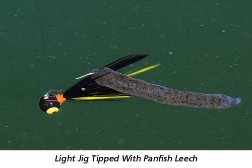 Light Jig Tipped With Panfish Leech