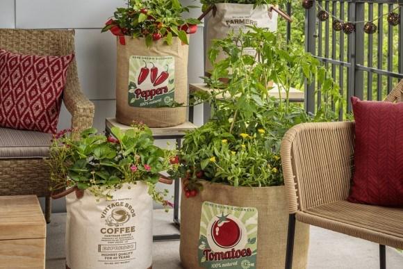 Balcony vegetable garden in containers