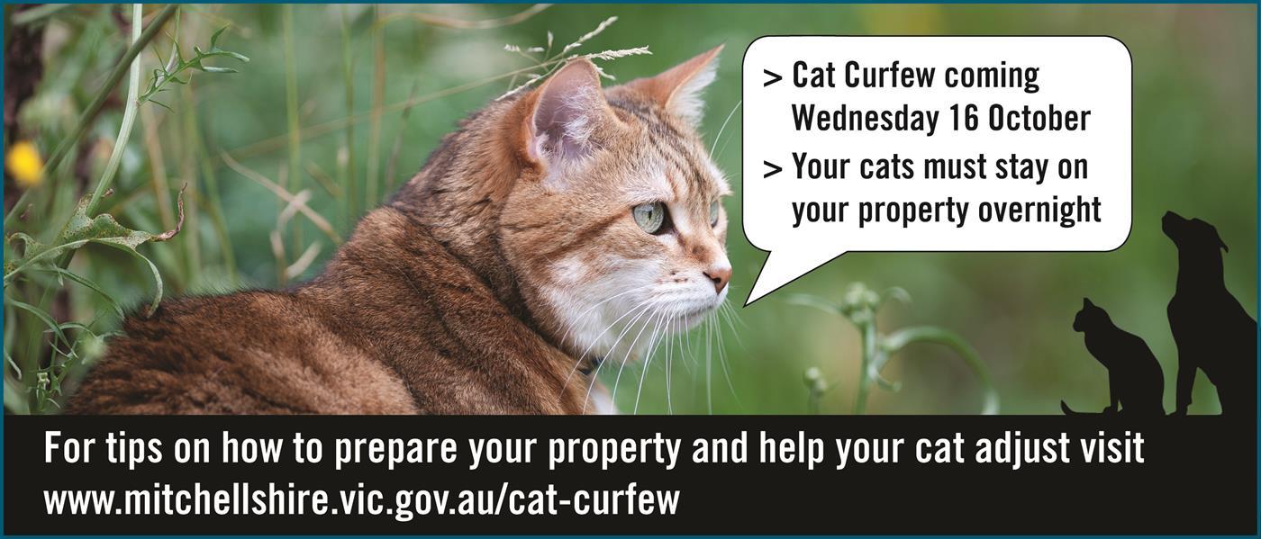 Cat Curfew information