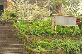 Eye-Level Garden