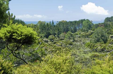 Wetland view on the Matarangi Bluff Track