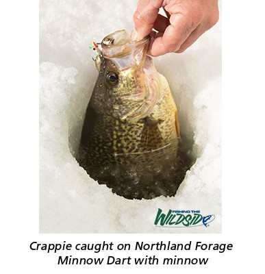 Crappie caught on Northland Forage Minnow Dart with minnow