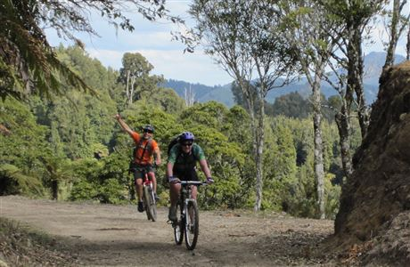 Cyclists enjoying The Timber Trail. Image: DOC