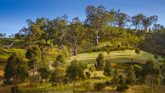 Scenic image of hills and trees