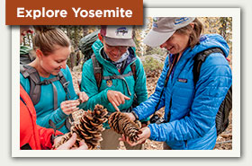 Explore Yosemite