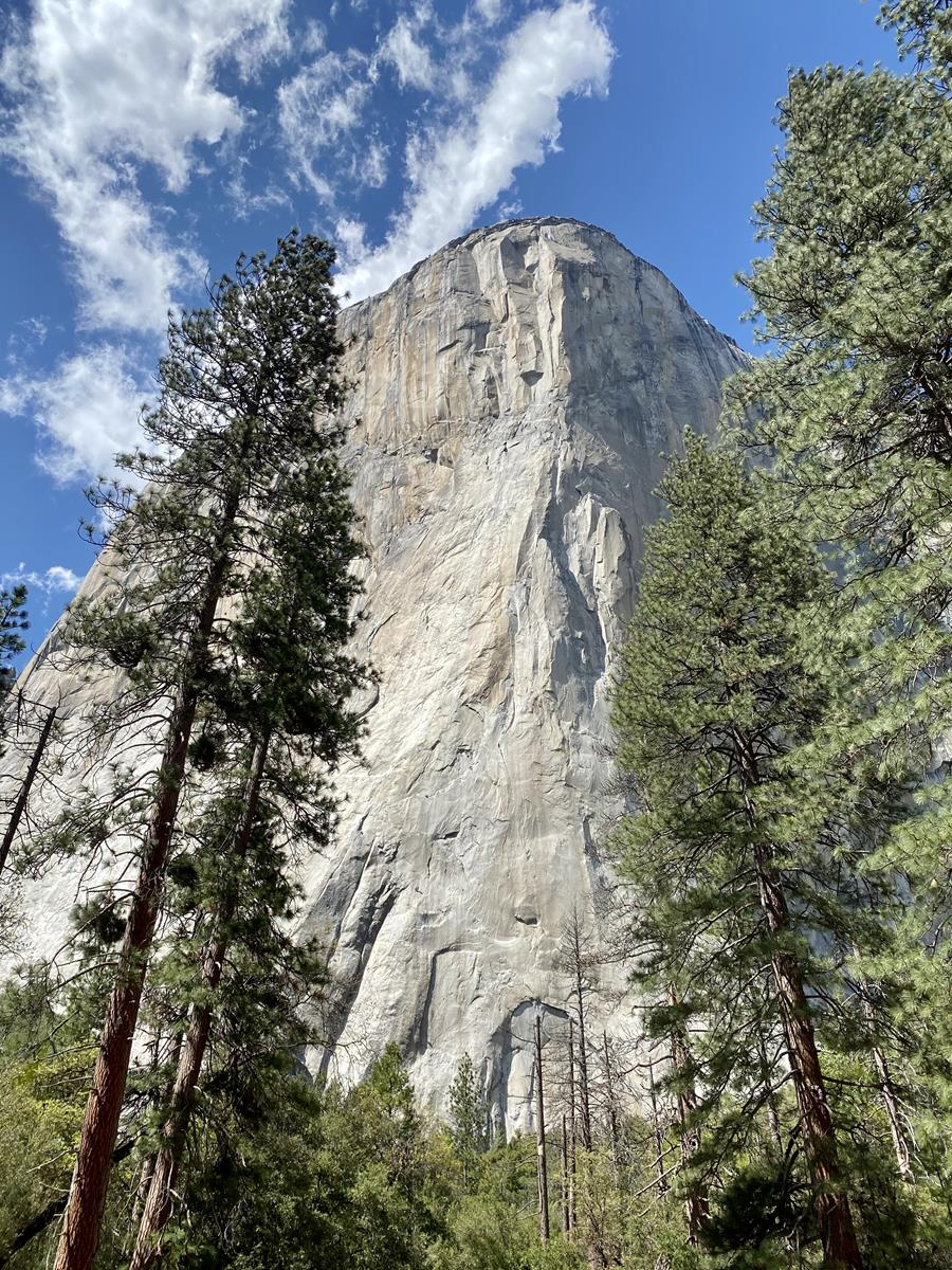 A beautiful vertical view of Yosemite's famous sheer granite feature, El Capitan, with a bright blue sky behind and green conifers in front.