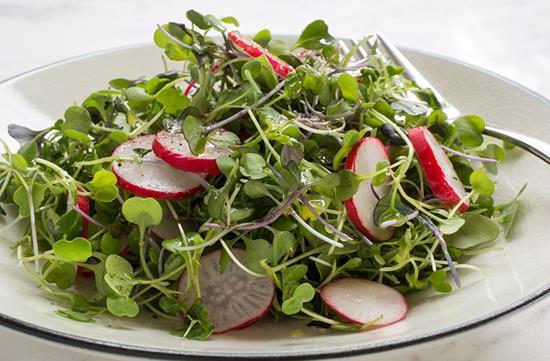 Microgreen salad with lime vinaigrette