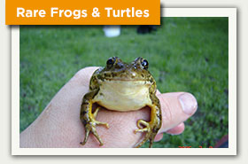 Rare Frogs and Turtles