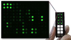 http://www.antibodies-online.com/resources/16/1431/Antibody+Arrays/