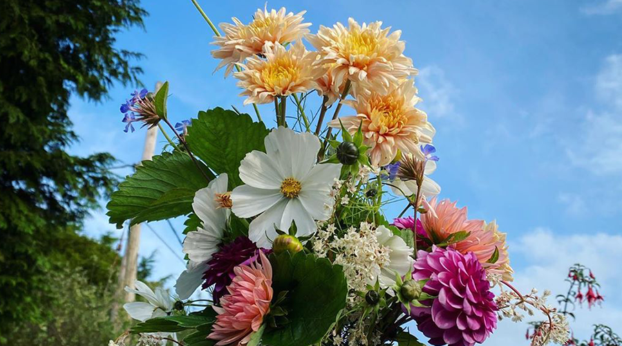 Keep your cut flowers looking gorgeous for as long as possible!