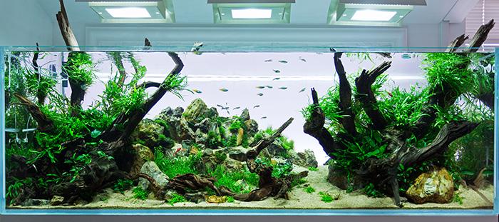Új bemuatótermi akváriumok boltunkban!