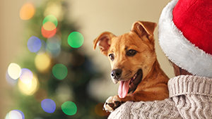Cute dog on Christmas background