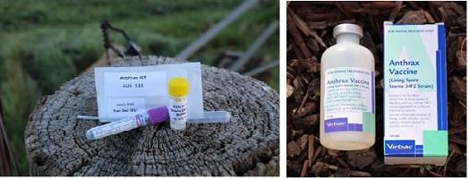 Anthrax ICT kit & Anthrax Vaccine