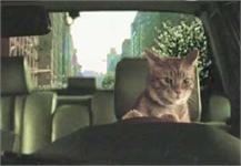 Cute cat driving, aka a cheap trick to get you to answer Modo's Annual Survey