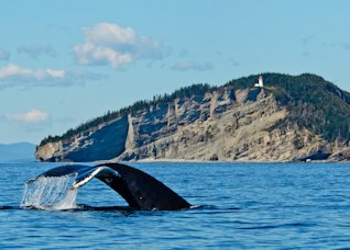 Baleine à Forillon