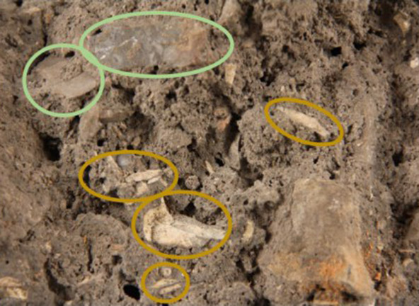 Image of the detail of breccia with stone tools circled in green and bone fragments circled in yellow.