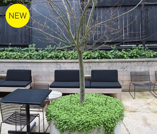 A new cafe reinvents this urban sanctuary
