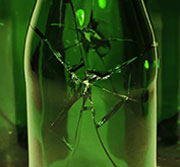 Testing and Fracture Diagnosis of Glass Bottles