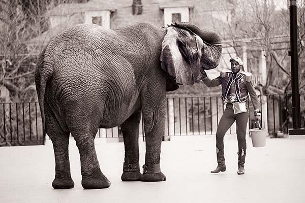 TYKE, ELEPHANT OUTLAW