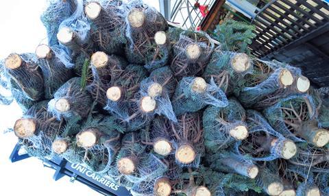 Bury Lane Farm Shop Christmas Trees