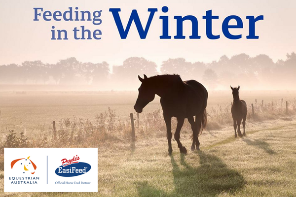 How to feed your horse in Winter