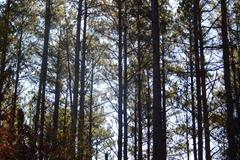 Timber and Turkey Tract, Twiggs Co. GA
