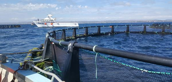 A large sea-cage, part of Indian Ocean Fresh Australia's rapidly-growing yellowtail kingfish farm in Champion Bay, off Geraldton.