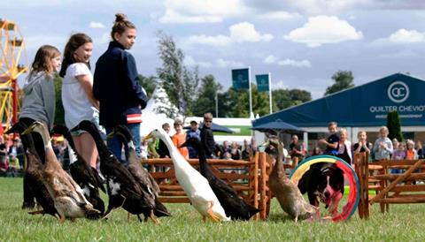 National Country show - Ducks