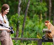 Taking pictures of a proboscis monkey