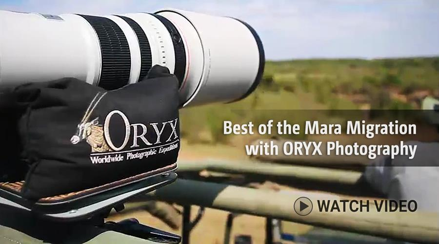 Best of the Mara Migration with ORYX Photography