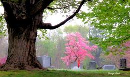 George Savic - Center Village Cemeterry
