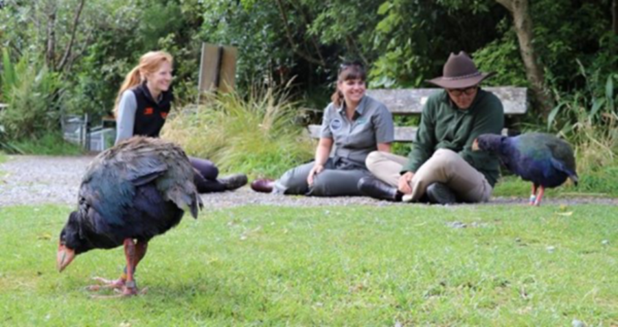 Puffin and T2 meet the NZ and Oz Threatened Species