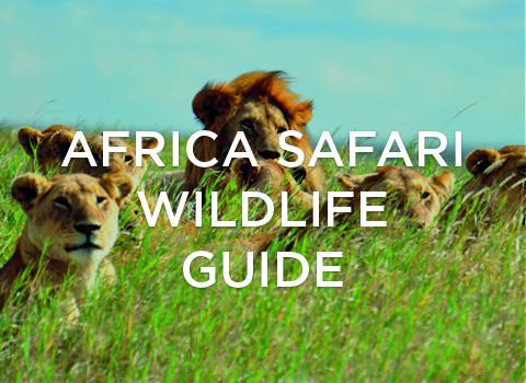 Africa Safari Wildlife Guide