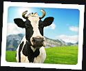 Photo of Happy Cow