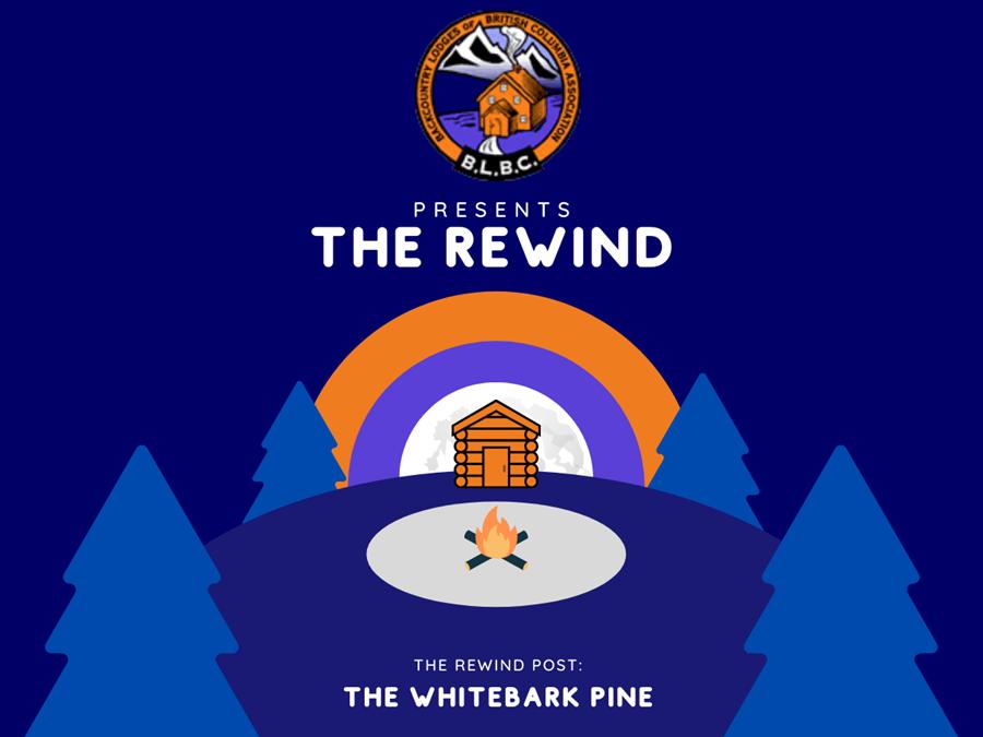 Introducing The Rewind Blog Series
