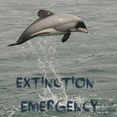 A New Zealand dolphin