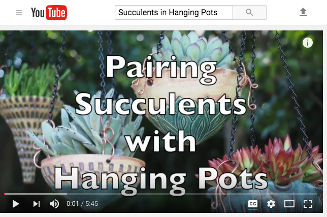Video, pairing succulents with hanging pots