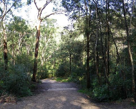 Blackbutt Creek track