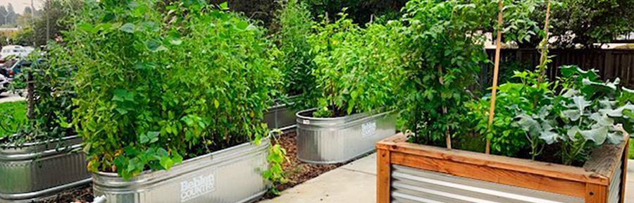 Imagen de hortalizas cultivadas en un huerto urbano
