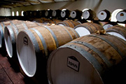 100 year old barrels at Seppeltsfield